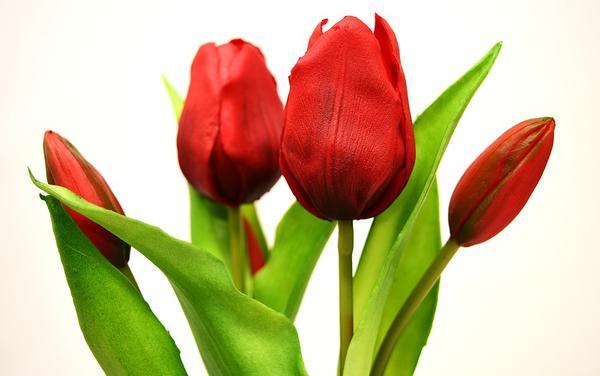 sztuczne kwiaty hurtownia