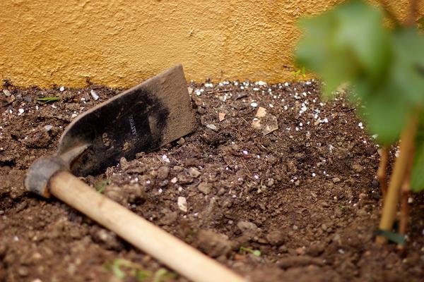 zakładanie ogrodów kraków